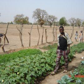 Das Ernährungsprojekt in Burkina Faso